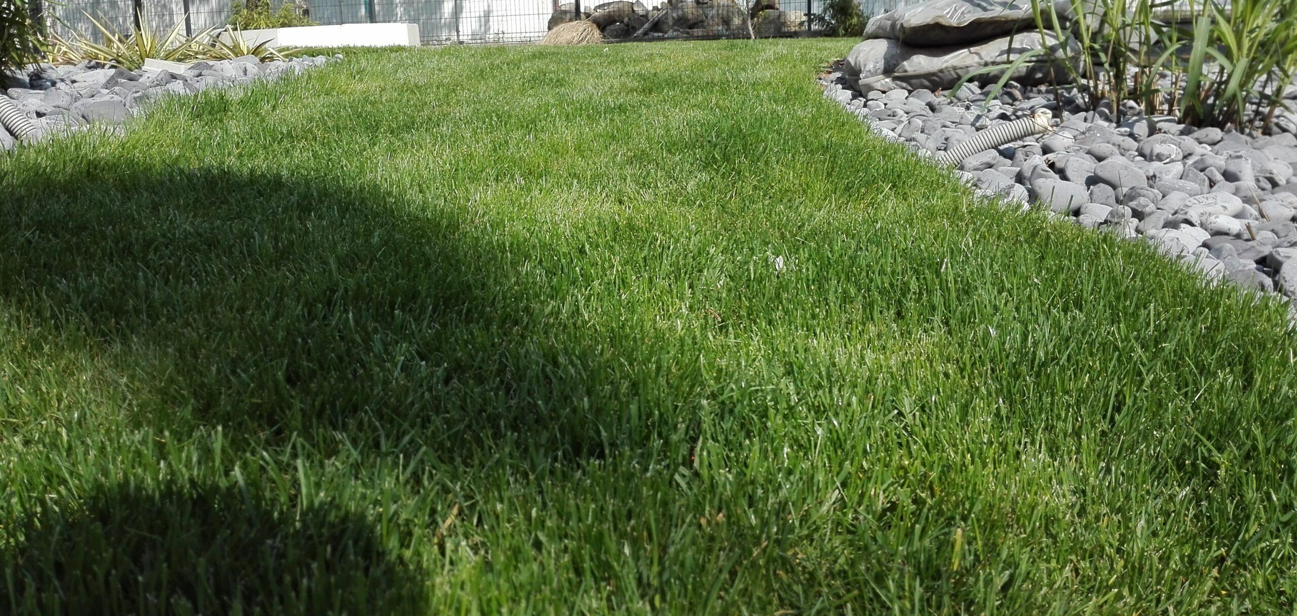 trawnik z siewu usługi ogrodnicze