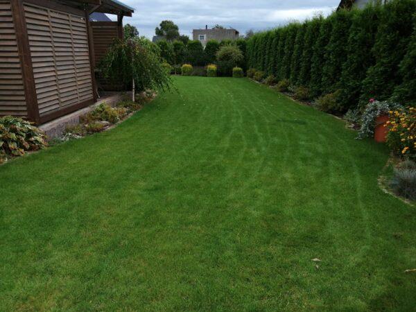 Trawnik po zasianiu